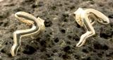 Schlange, Ohrstecker, 925 Sterling Silber