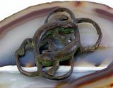 Geckos, Bronze, Miniatur